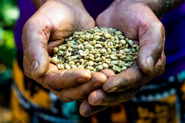 Boer houdt rauwe koffiebonen in zijn hand