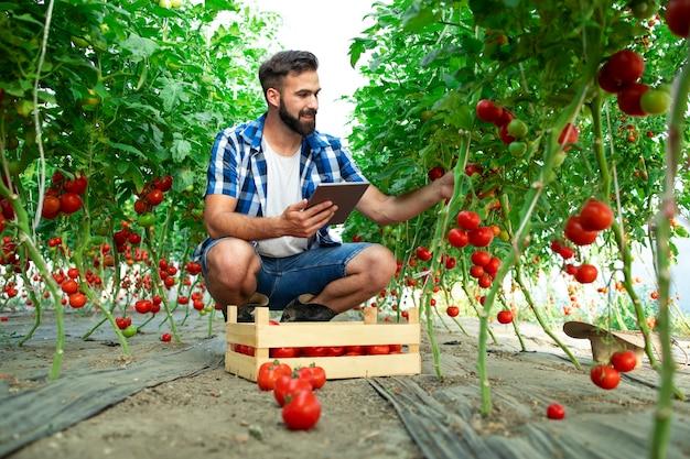 Boer houdt tablet en controleert de kwaliteit van tomatengroenten terwijl hij in een biologische boerderij staat