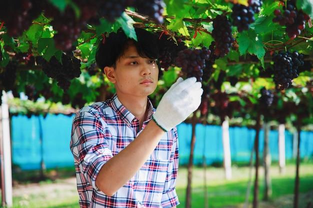 Boer in de wijngaard die de kwaliteit van de opbrengst onderzoekt