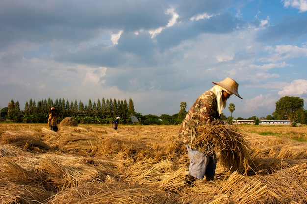 Boer in veld