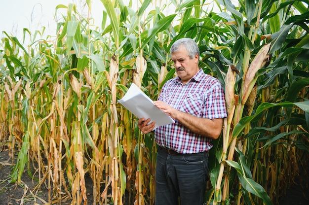 Boer inspecteert maïskolf op zijn veld