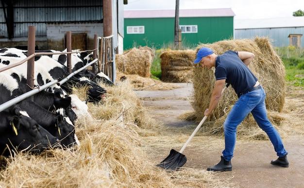 Boer man lopende schop op boerderij van koeien