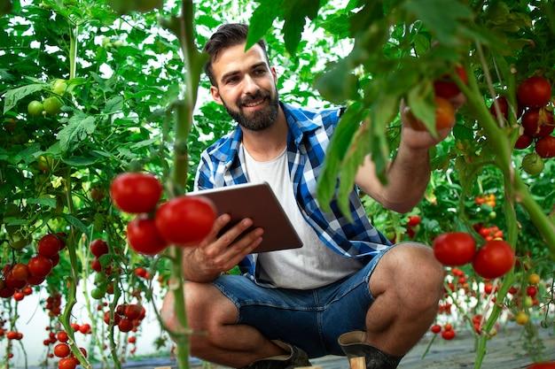 Boer met tabletcomputer die kwaliteit en versheid van tomatengroenten in biologisch voedselboerderij controleert