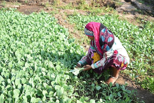 Boer met tractor land voorbereiden zaaien met zaaibed cultivator