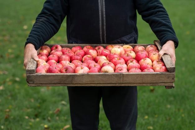 Boer met vers geoogste appels in houten kist landbouw en tuinieren concept