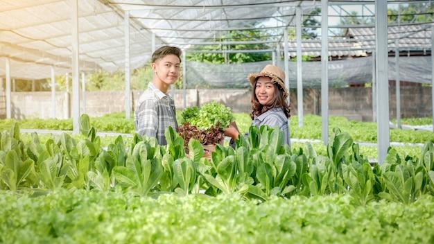 Boer oogst plantaardige biologische salade, sla van hydrocultuurboerderij voor klanten