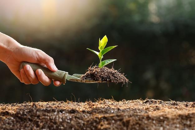 Boer plant jonge spruit in vruchtbare grond.