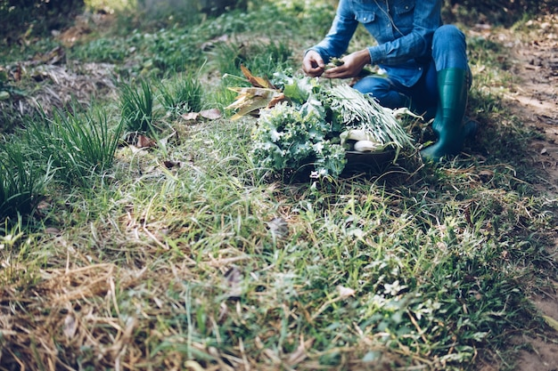 Boer plukken oogst bieslook groente uit tuin boerderij