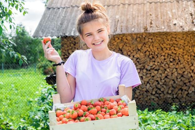 Boer plukt aardbeien uit een struik.