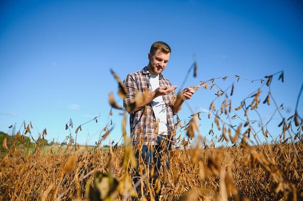 Boer staat in sojabonenveld en onderzoekt gewas bij zonsondergang.