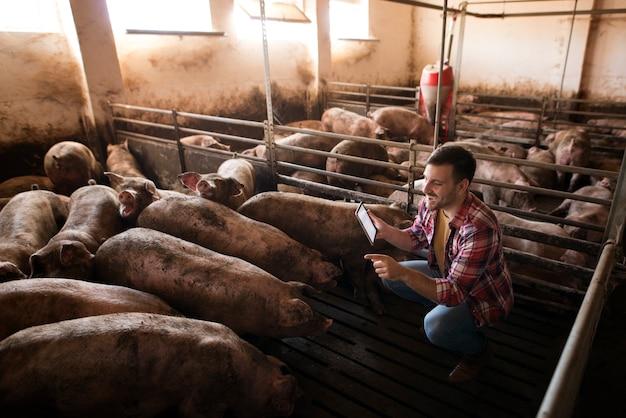Boer veehouder die voor varkens zorgt