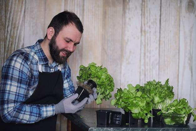 Boer verbouwt verse slablaadjes voor het bereiden van smakelijke gerechten