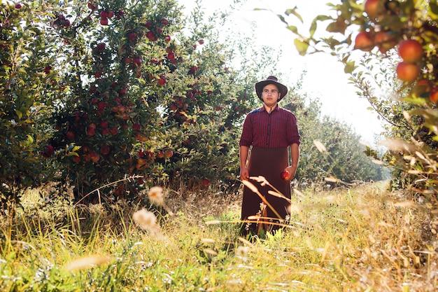 Boer verzamelt rijpe appels in de tuin