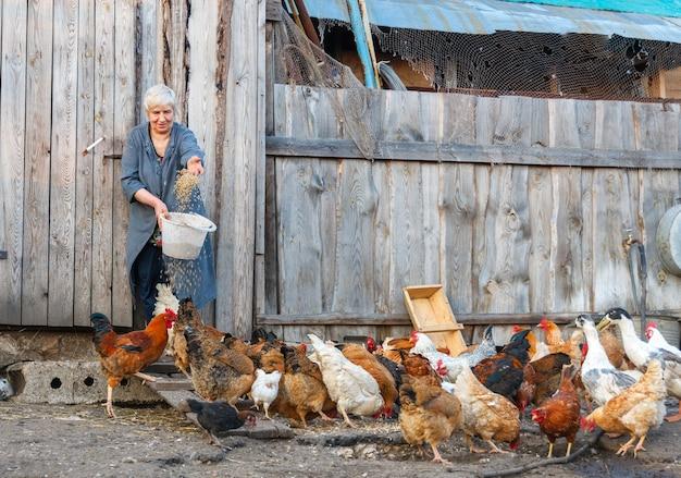 Boer vrouw met een emmer voer pluimvee kippen en ganzen