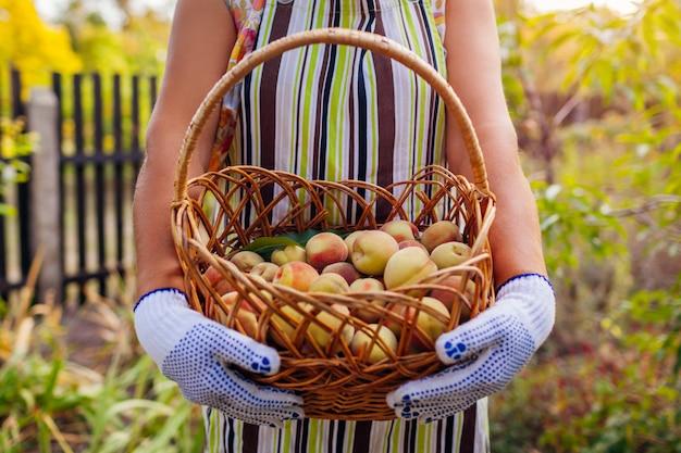 Boer vrouw met mand met rijpe biologische perziken in zomer boomgaard.