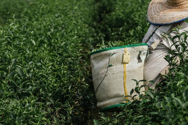 Boer werkt in de weelderige velden van een terrasvormige boerderij.