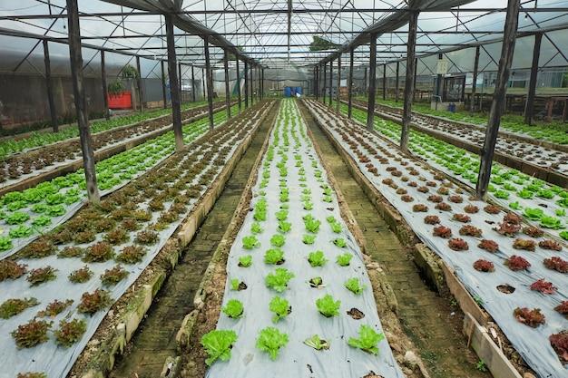 Boerderij groeit groenten binnenshuis groenten voor salade