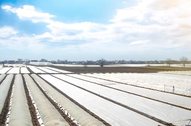 Boerderij landbouwvelden bedekt met witte spingebonden agrofibre plastic vezels