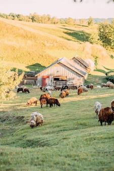 Boerderij met schapen en geiten