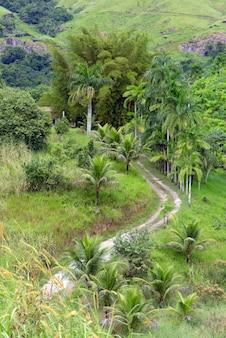 Boerderij onverharde weg, geflankeerd door palmbomen en gras. brazilië
