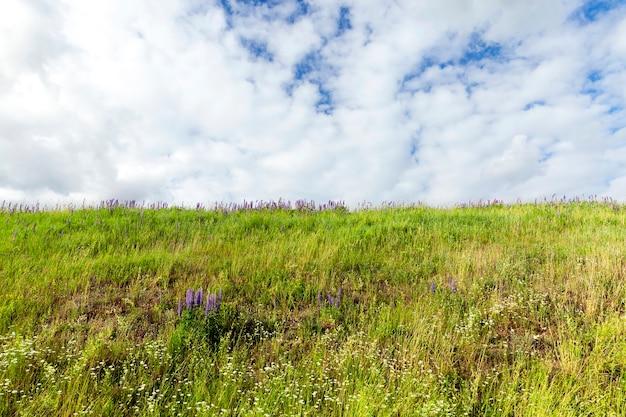 Boerderij veld waarop groene vegetatie en gras groeit. foto close-up. zomerseizoen