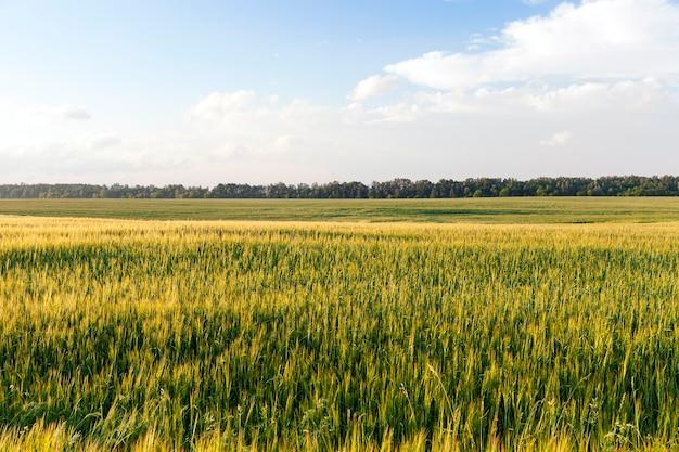 Boerderij veld waarop groene vegetatie en gras groeit