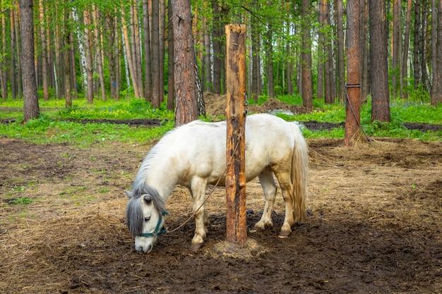 Boerderijdieren in een privé-contactdierentuin huskyland in kemerovo, rusland