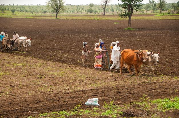Boeren en arbeiders ploegen en zaaien landbouwgrond op traditionele wijze met behulp van stieren