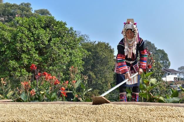 Boeren sorteren en drogen arabica-koffiebonen in zonlicht op de verzonken terrassen in de noordelijke hooglanden van de provincie chiang mai in thailand.