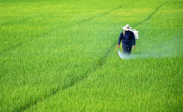 Boeren sproeien gewassen in een groen veld.