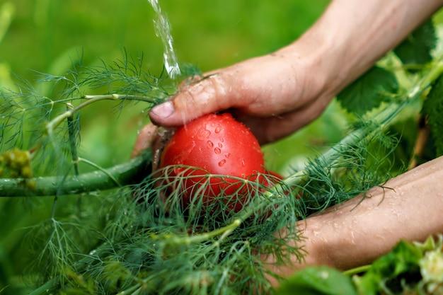 Boerenhand die het groene kruid en de groenten in de tuin met waterplons wast
