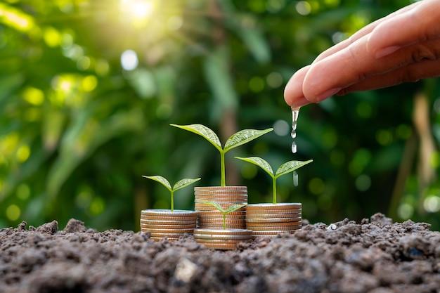 Boerenhanden geven planten water op gestapelde munten en natuurlijk onscherpe achtergrond, mkb financiële groei en investeringsconcept.