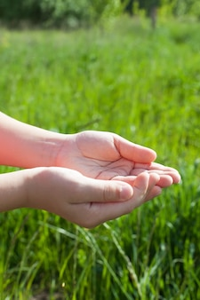 Boerenhanden houden rijpe tarwezaden vast na de oogst.
