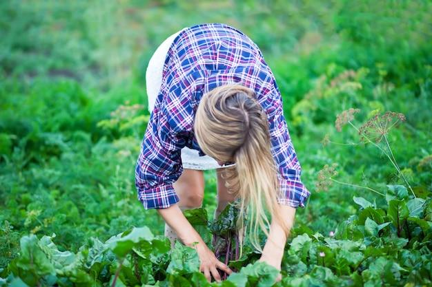 Boerin plukken verse rode biet op een tuin