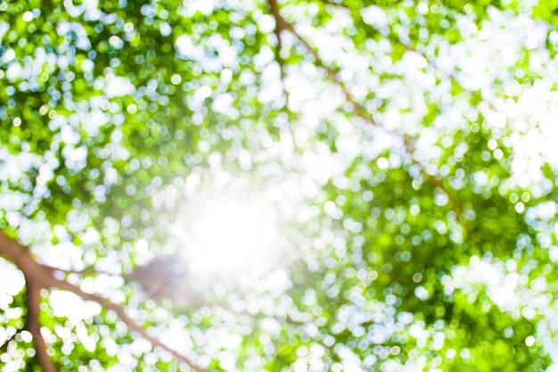 Bokeh-afbeelding van bomen en takken