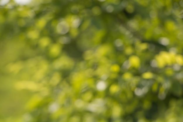 Bokeh van boombladeren voor aardachtergrond en sparen groen