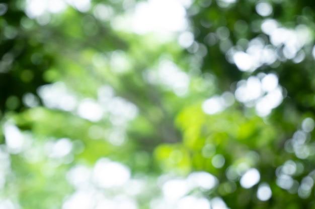 Bokeh vervaging boom natuur achtergrond met zonlicht op zomer lente seizoen