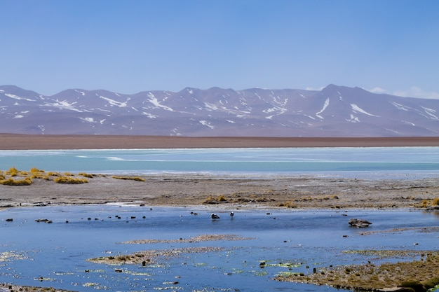 Boliviaans lagunelandschap