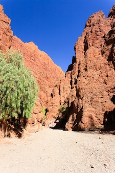 Boliviaanse canyon in de buurt van tupiza, bolivia.