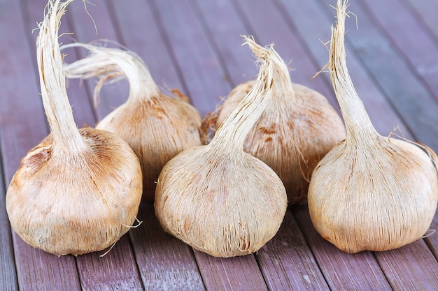 Bollen van crocus sativus, droge kruidensaffraan in houten lepel op een houten ondergrond. crocus sativus planten.