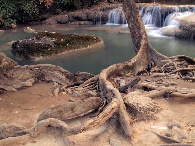 Bomen aan de rand van de waterval