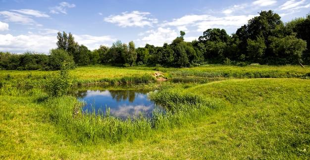 Bomen bedekt met groen blad in de lente of zomer, aangename mooie natuur en frisse lucht, bomen groeien aan de rivier of het meer