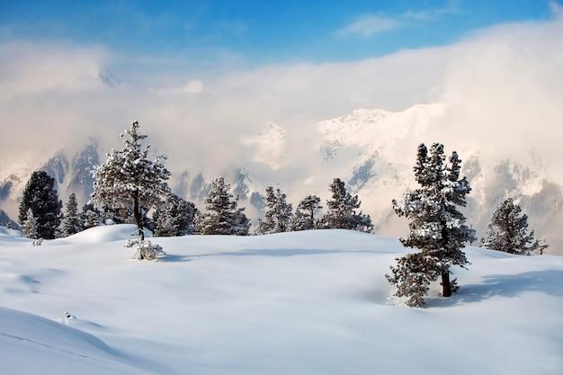 Bomen bedekt met rijp en sneeuw in de bergen. het bekendste skigebied mayrhofen, oostenrijk