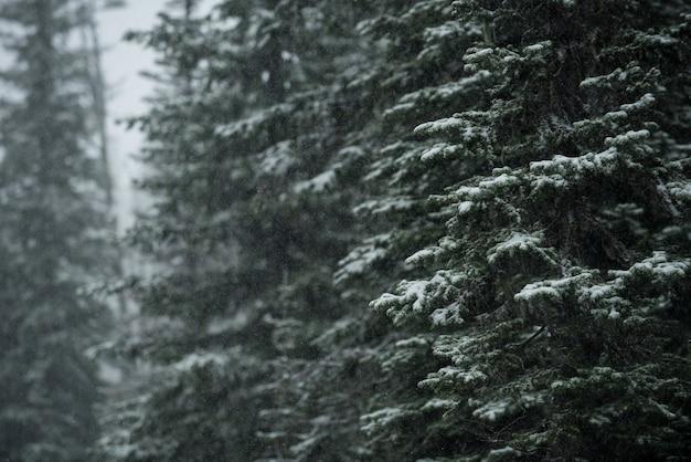 Bomen bedekt met sneeuw in de winter