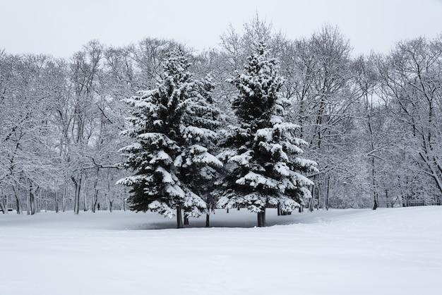 Bomen bedekt met sneeuw in de wintertuin. het verhaal van de winter in het kolomenskoye park.