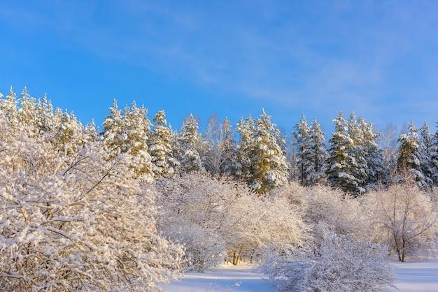 Bomen bedekt met sneeuw in het zonlicht tegen blauwe hemel in een verlaten park. winterbos met kopie ruimte.