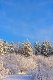Bomen bedekt met sneeuw tegen blauwe hemel