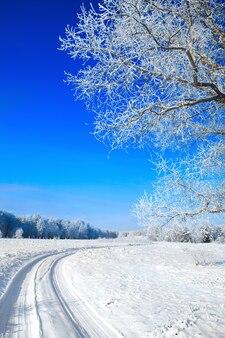 Bomen bedekt met sneeuw tegen de lucht