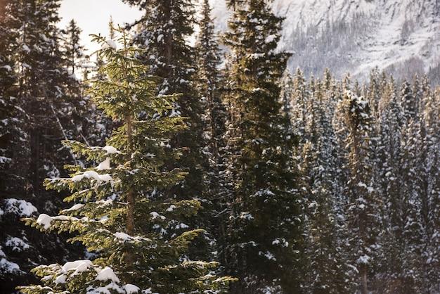 Bomen bedekt met sneeuw