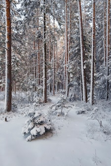 Bomen bedekt met verse sneeuw in een fantastische winter